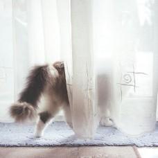 Как отбелить тюль в домашних условиях?
